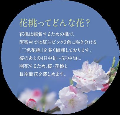 花桃ってどんな花?